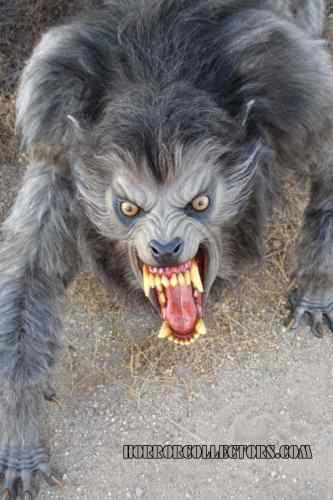 An American Werewolf in London fullsize wolf movie replica